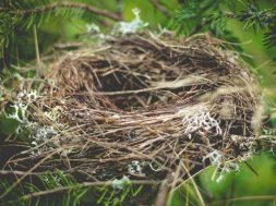 empty-nest