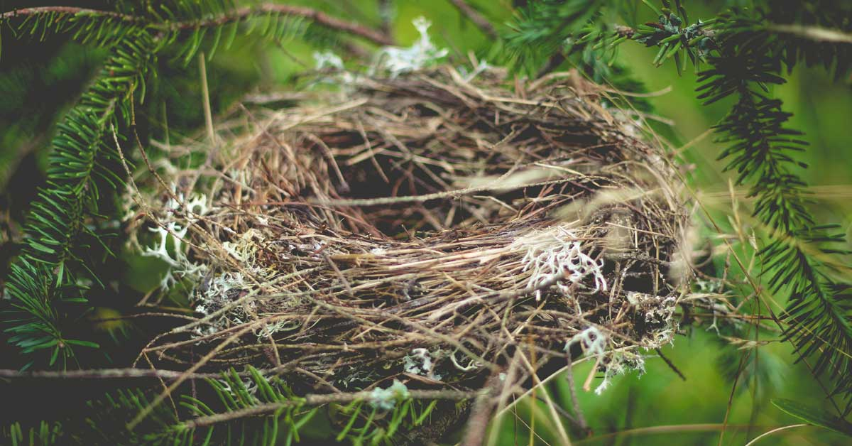 Your New Roles with an Empty Nest