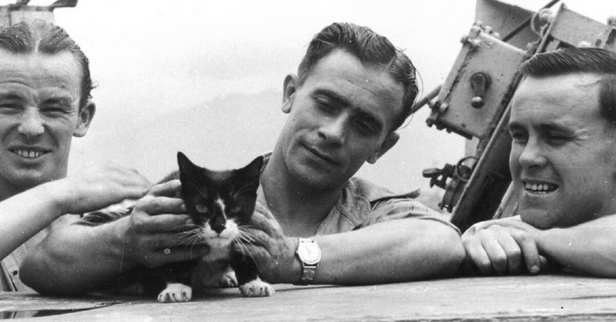 Brave, Funny, Naughty Maritime Cats