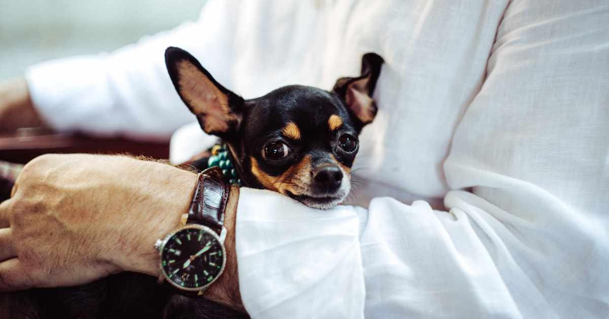 10 Things to Do Before Taking Your Dog to Work