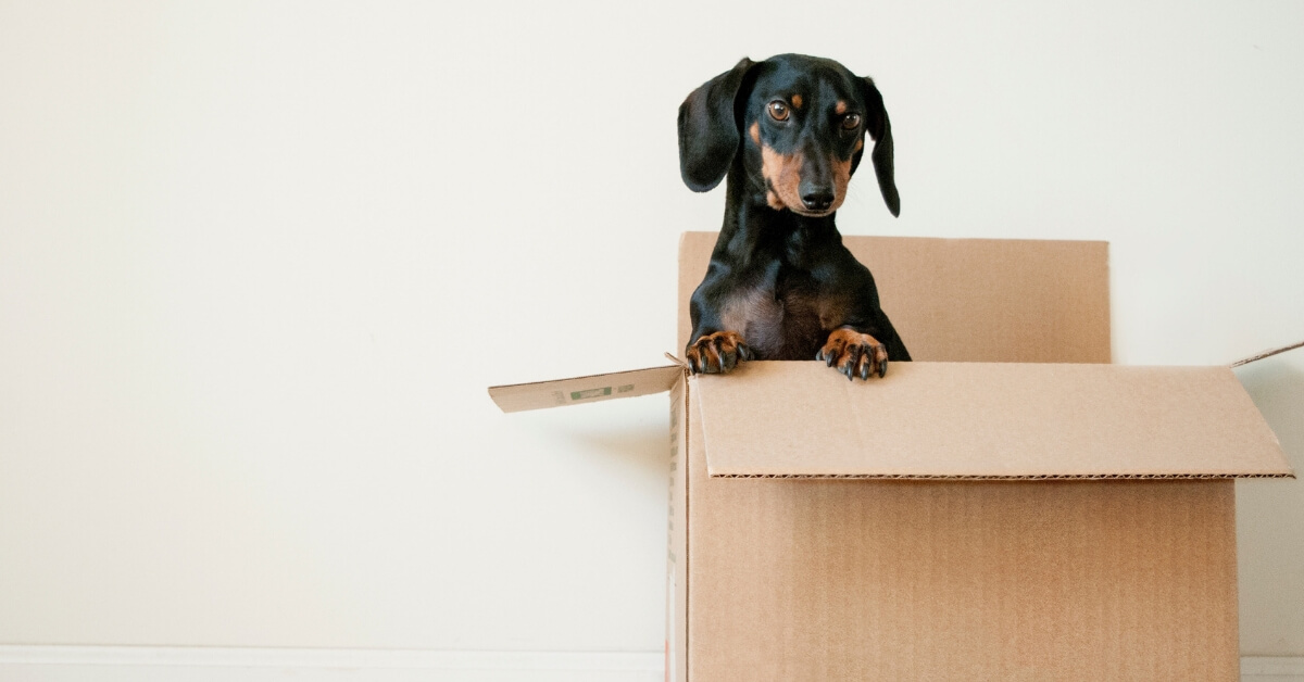 Moving? How to Help Your Child Settle into a New School