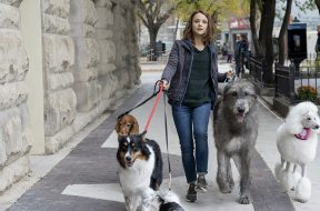 Walking-dogs-Universal-Pictures-1-1.jpg